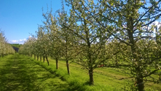 L'arboriculture en Normandie et la production de fruits